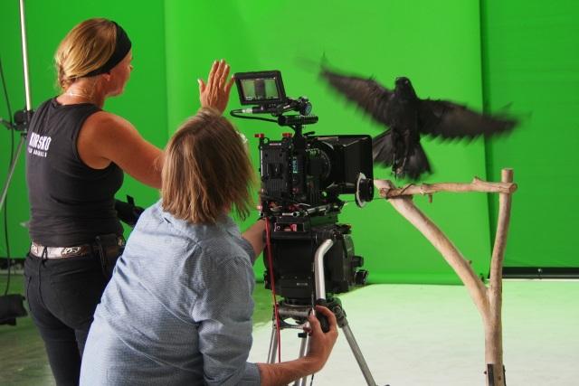 Raven_shoot 010